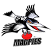 Colingwood Magpies